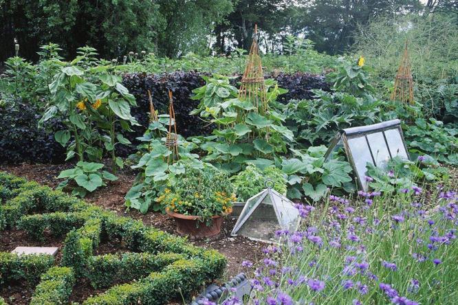 择一处别墅花园静地,开个喜欢的菜园吧