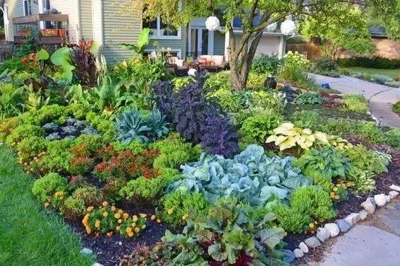 只想在私家花园里种上爱吃的蔬菜