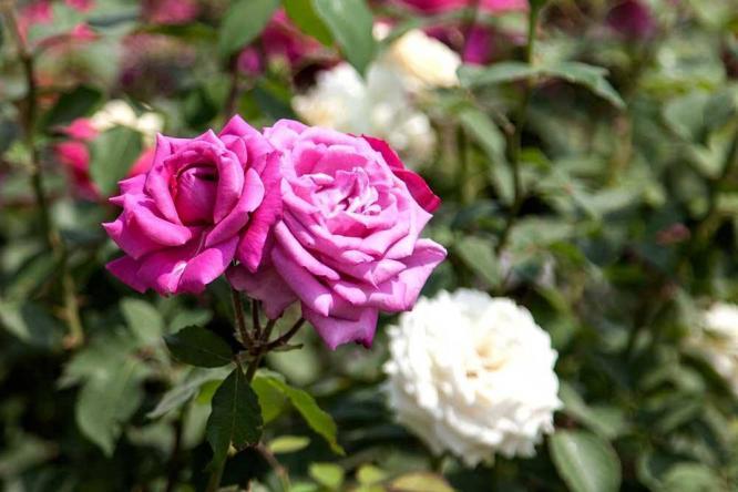 季节气候对花园设计中植物的影响及作用