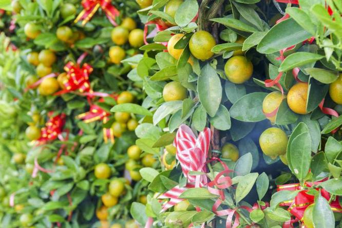 看别墅花园里的那馋人的果实