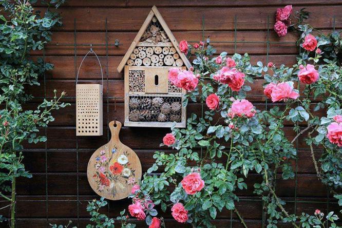 适合阳台花园种植的花?瞬间欣赏美景