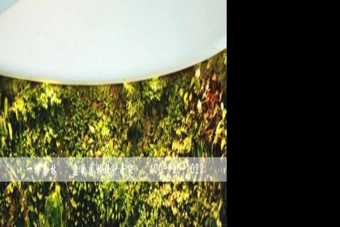 绿化墙、植物墙的存在价值与意义