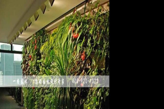 垂直植物墙给大家带来的好处有哪些?