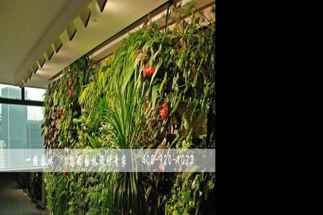 植物墙、生态墙、垂直绿化墙是什么概念?