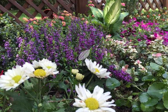 一格园林提示5月别墅花园景观植物养护指南,4个重点请查收